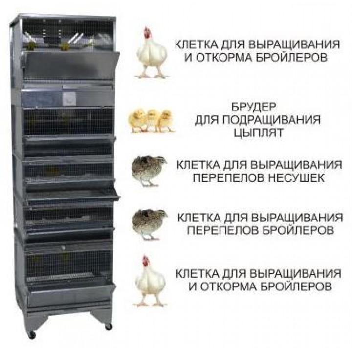"""""""Домашняя Ферма 6"""" премиум купить"""