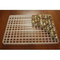 Сотовый лоток для перепелиных яиц
