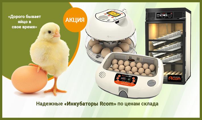 Инкубаторы для яиц
