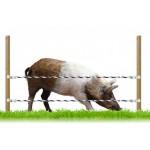 Электропастух для свиней купить