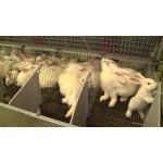 Кроликоферма (мини-ферма для кроликов) купить