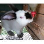 Поилки для кроликов купить
