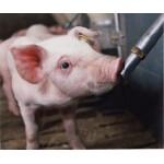 Поилки для свиней и поросят купить