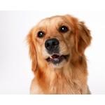 Товары для собак купить