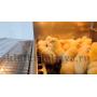 Брудер для цыплят Базис 90-БР-1 Стандарт купить