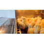Брудер для цыплят Базис 90-БР-1 Премиум купить