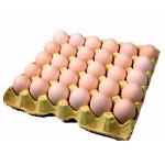 Лоток для яиц купить