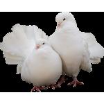 Товары для голубей купить