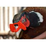 Очки для фазанов, стрелы и наклювники купить