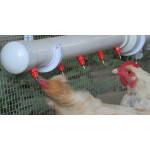 Системы поения птиц купить