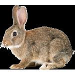 Оборудование для кролиководства купить